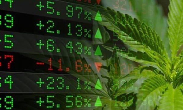 Sempre più banche al servizio dell'industria della cannabis legale