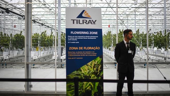 Tilray, il titolo sta tornando in auge? Analisi e previsioni